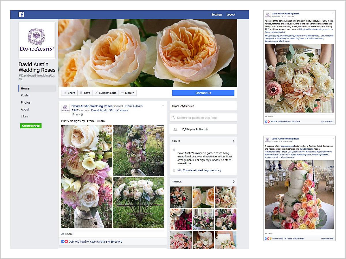 David Austin Roses Blog